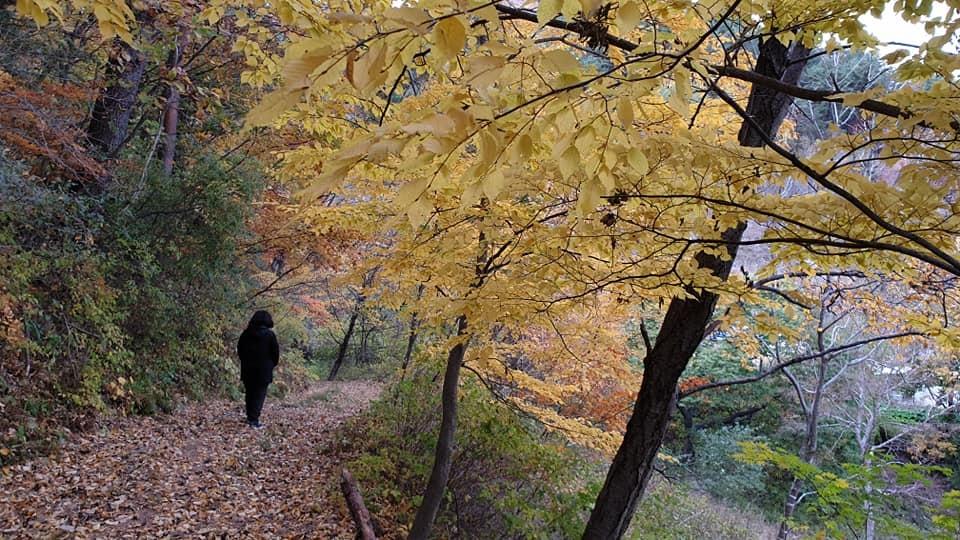 영양 외씨버선길 가을 단풍 풍경