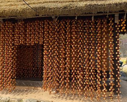 한국의 전통시장 (8) 상주곶감 장