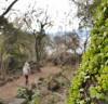 겨울 걷기 좋은 길, 화순곶자왈 생태숲