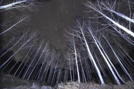별밤 은하수 촬영의 명소, 죽파리 자작나무숲