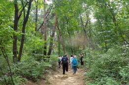 피톤치드 뿜뿜 서울대공원 산림욕장 둘레길, 가을 은행나무 길은 환상